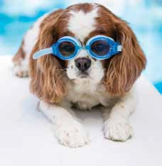 Heckington Community Swimming Pool allowed dogs to take an end of season dip.