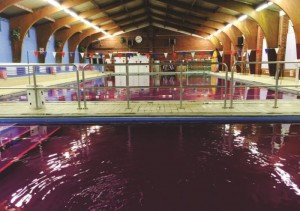 Hythe Swimming Pool won a purple pool party after winning a competition organised by JAK Water Systems.