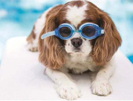 There are at least 362 hydrotherapy pools solely for animals in the UK.